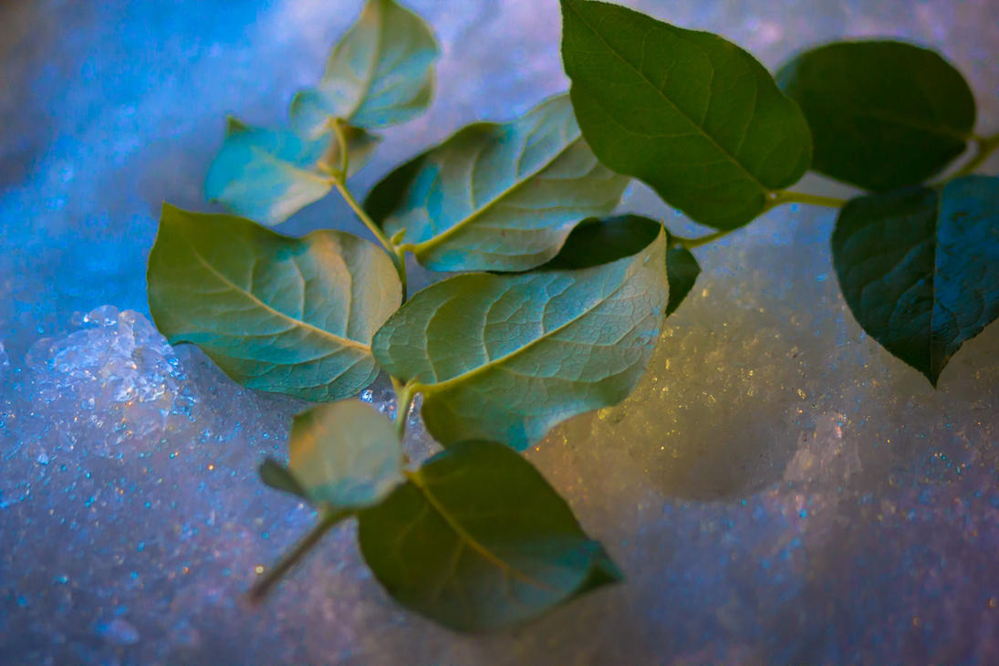 fish leaves by crag137