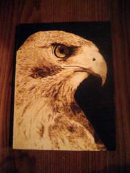 Aquila by LabOutside