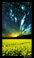 yellow field by adypetrisor