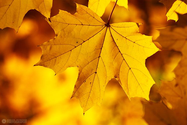 Golden season by adypetrisor