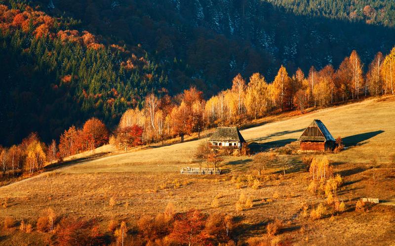 autumn light by adypetrisor