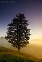 Foggy morning 5 by adypetrisor