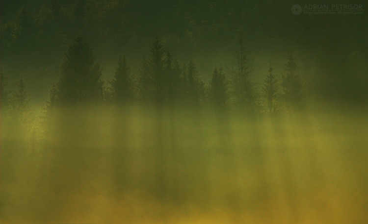 Foggy morning 13 by adypetrisor