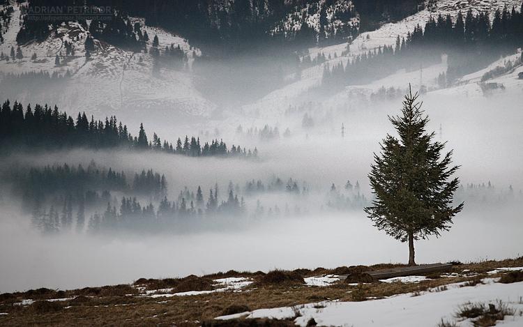 dark mist I by adypetrisor