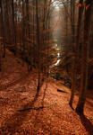 red forest III