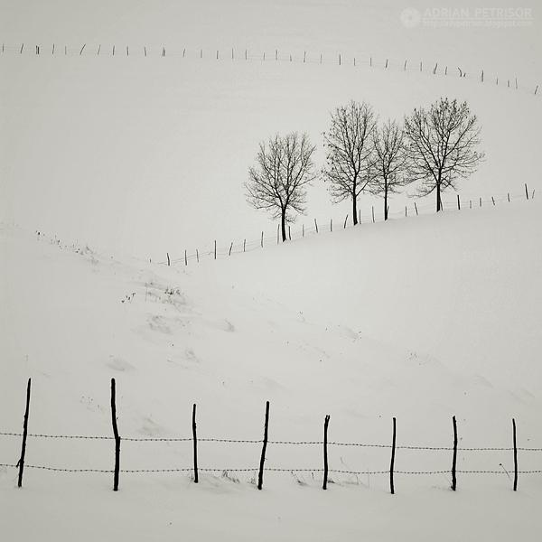 fences by adypetrisor
