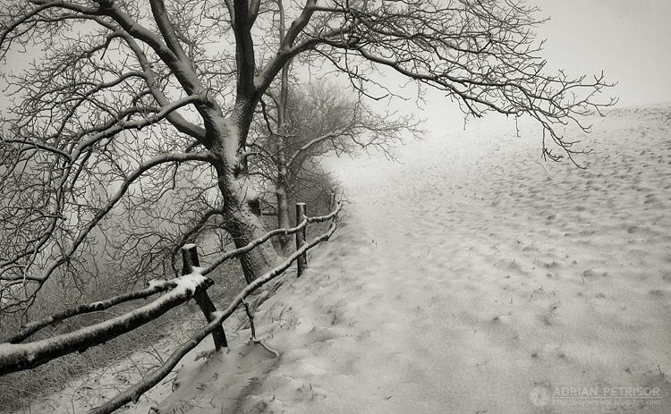 fences 1 by adypetrisor