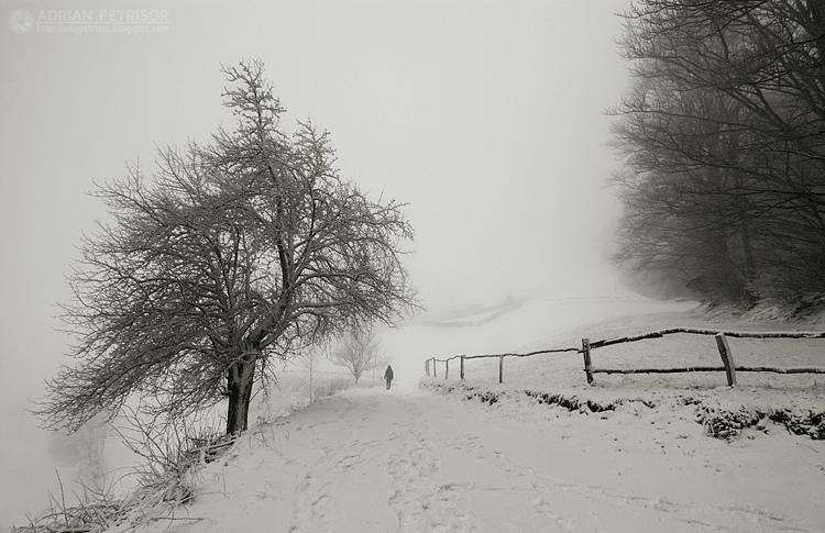 fences 3 by adypetrisor