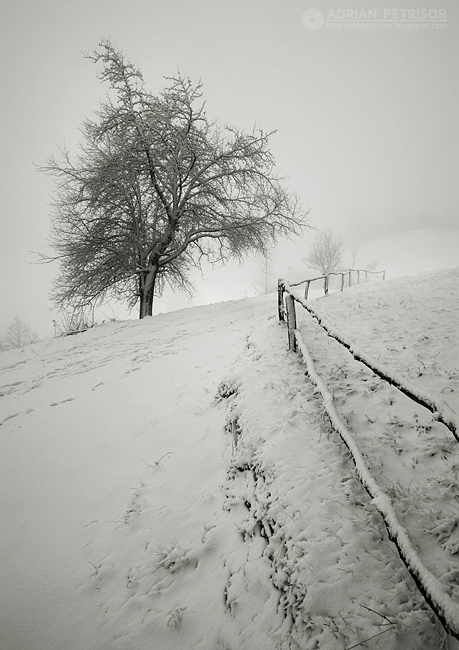 fences 6 by adypetrisor