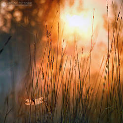Morning feeling by adypetrisor