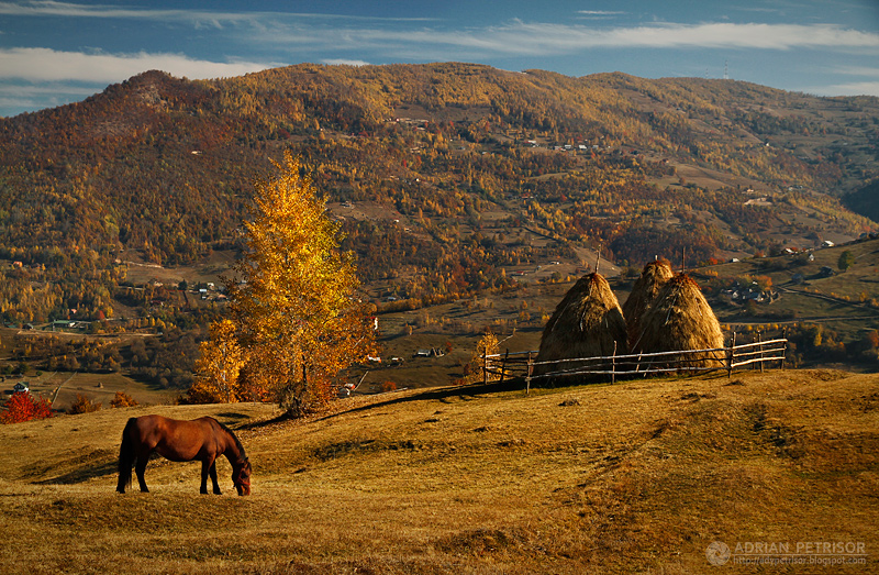 Autumn colors in Apuseni Mountains 29 by adypetrisor