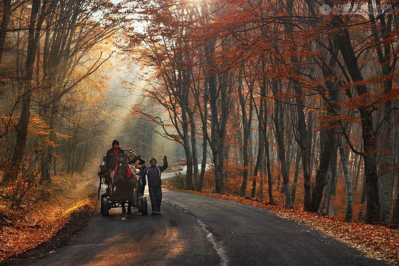 Autumn colors in Apuseni Mountains 30 by adypetrisor