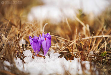 Spring it`s here