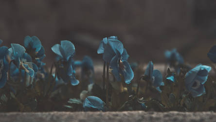 spring is creeping upon us by ntone