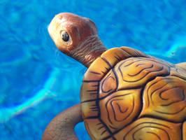 Sea Turtle by hugsx3kisses