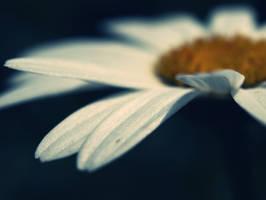 Petals by mikemcnary