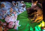 The Feline Invasion