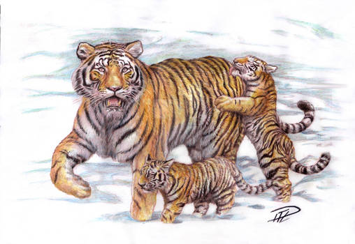 Tigrinna + Ungar / Tigress and Cubs color drawing