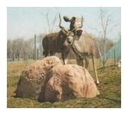 Antelope by jeweliaz