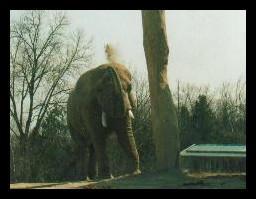 Elephant Taking a Dirt Bath by jeweliaz
