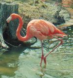 Pink Flamingo by jeweliaz