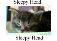 Sleepy Head Kitty by jeweliaz