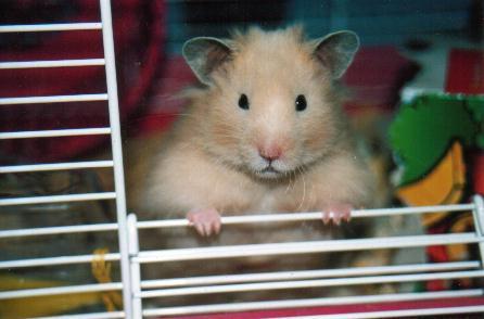 Winnie The Hamster