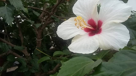 Upper Flower by LadyLewind