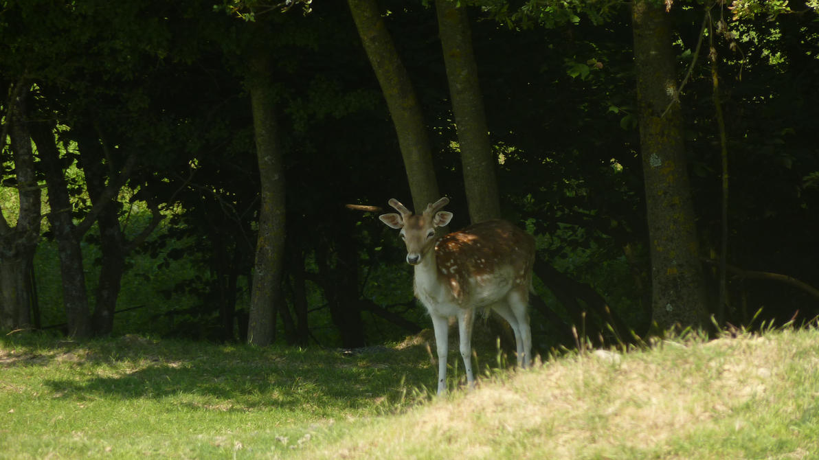 Deer 2 by Alphagoth