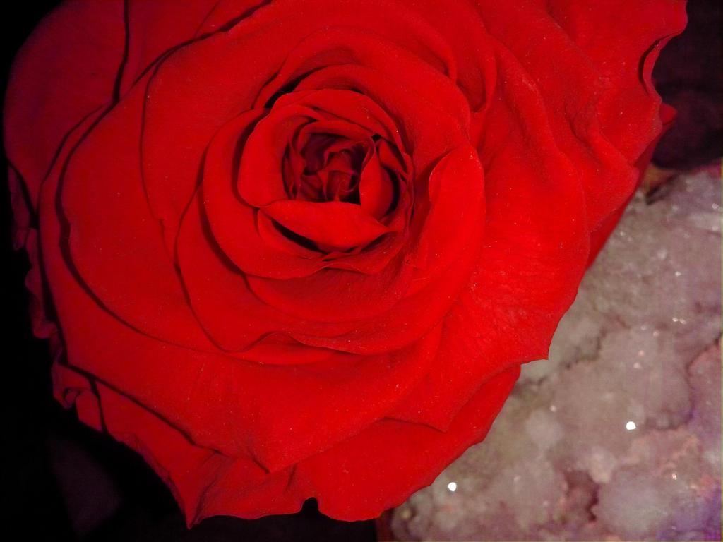 Valentine by Alphagoth