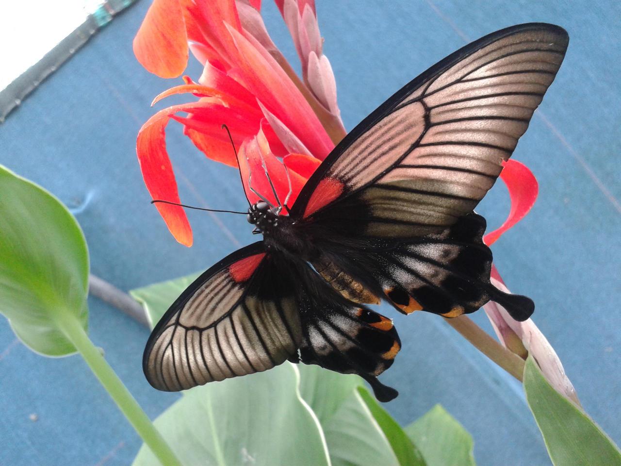 Nature's precious by Alphagoth