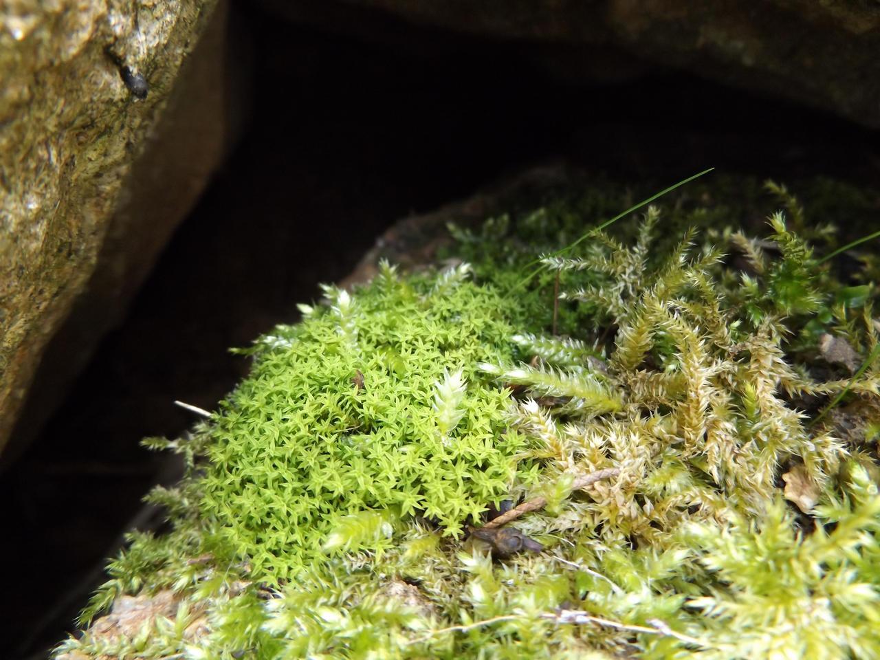 Moss by Alphagoth