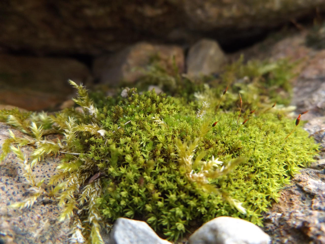 Moss rock cavern by Alphagoth