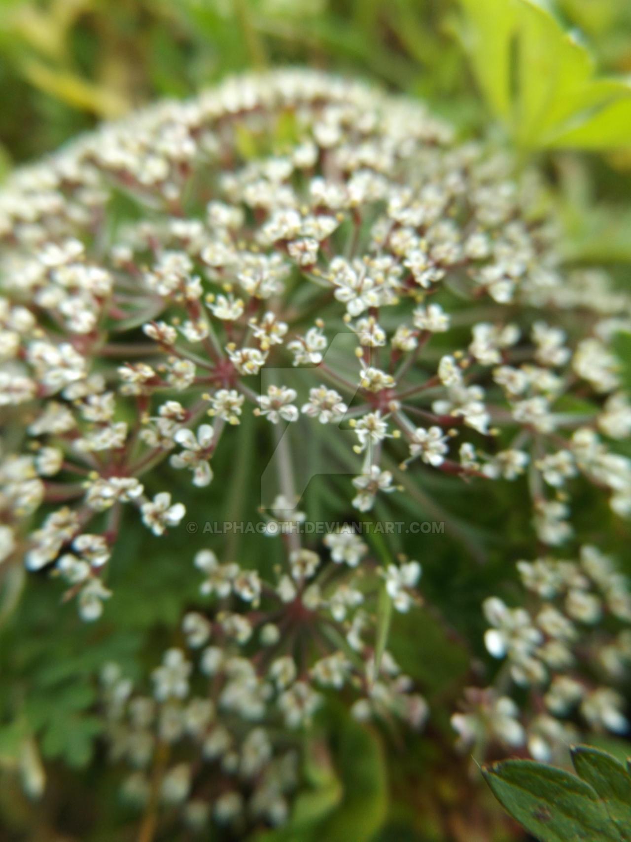 Flower by Alphagoth