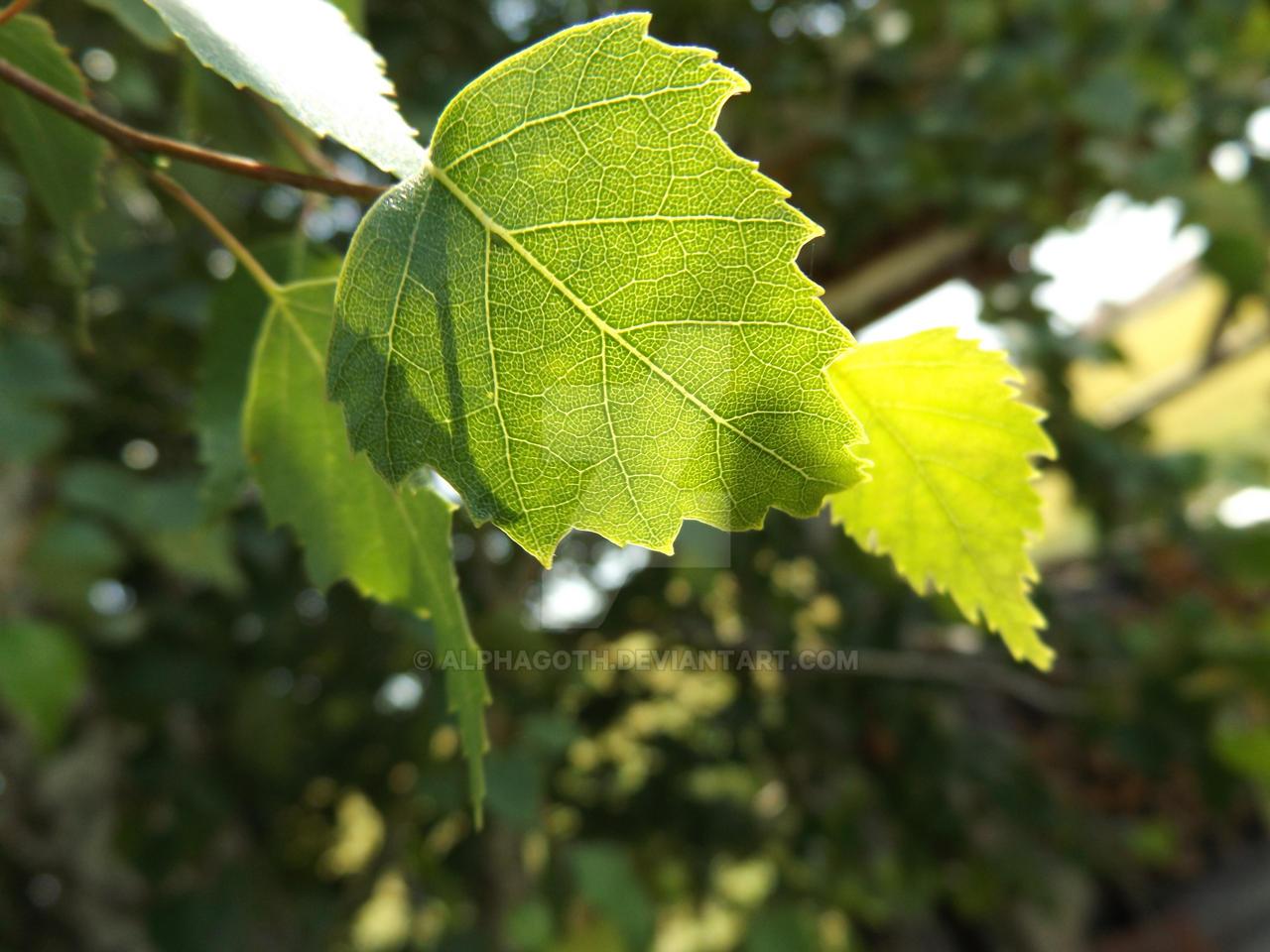 Leaf by Alphagoth