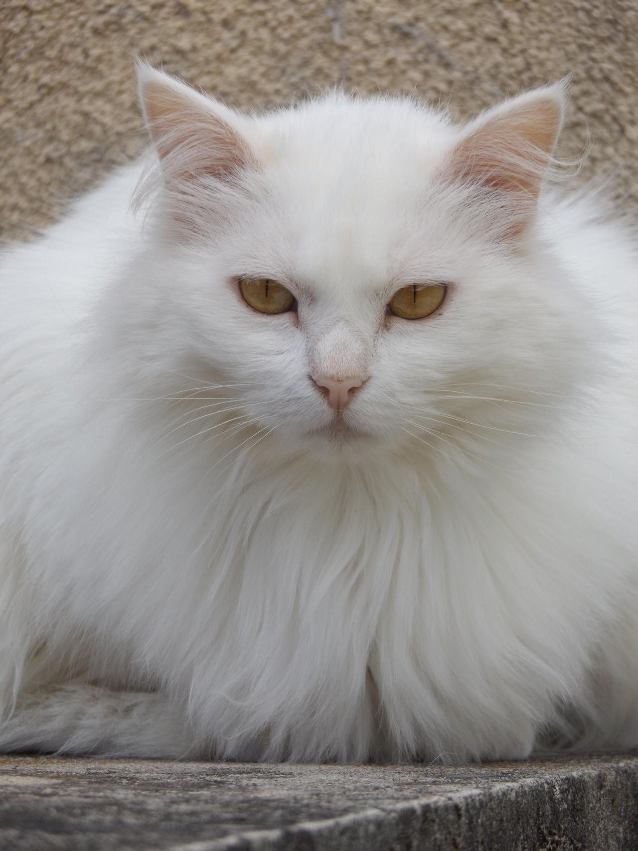 Cat 1 by Alphagoth