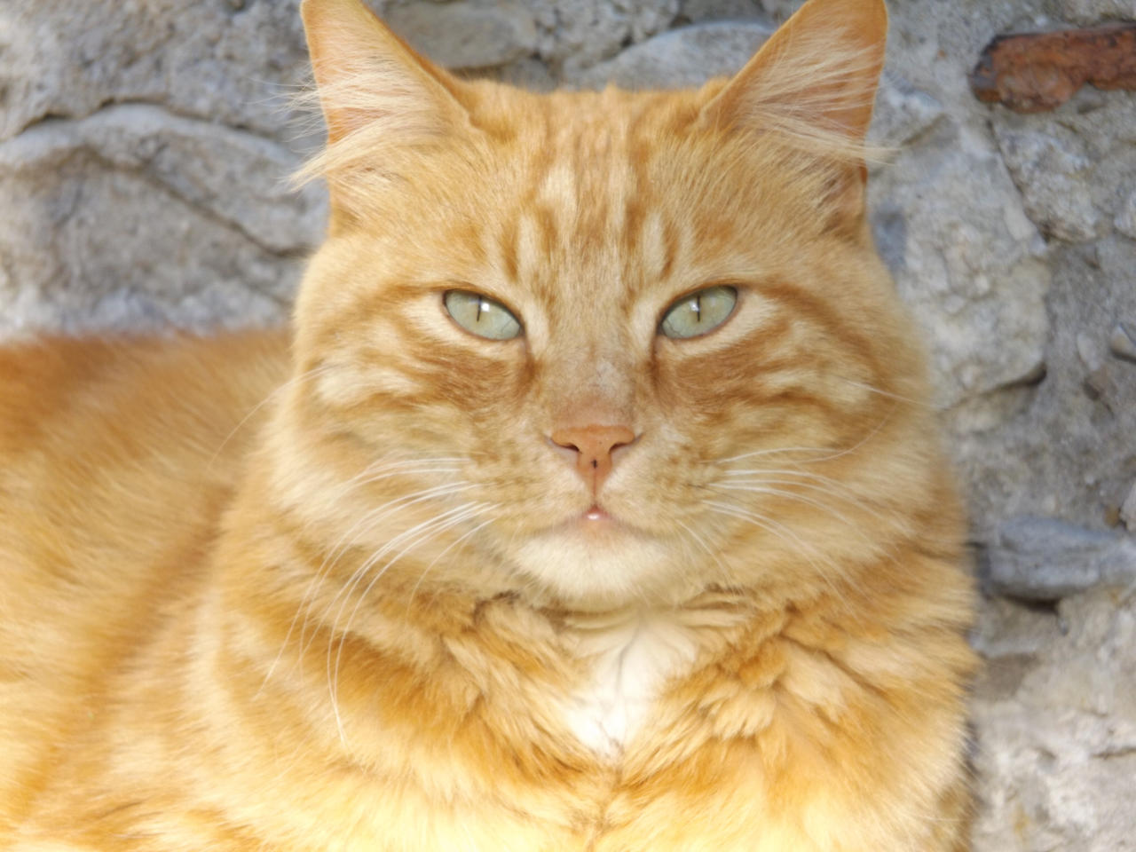 Cat 2 by Alphagoth