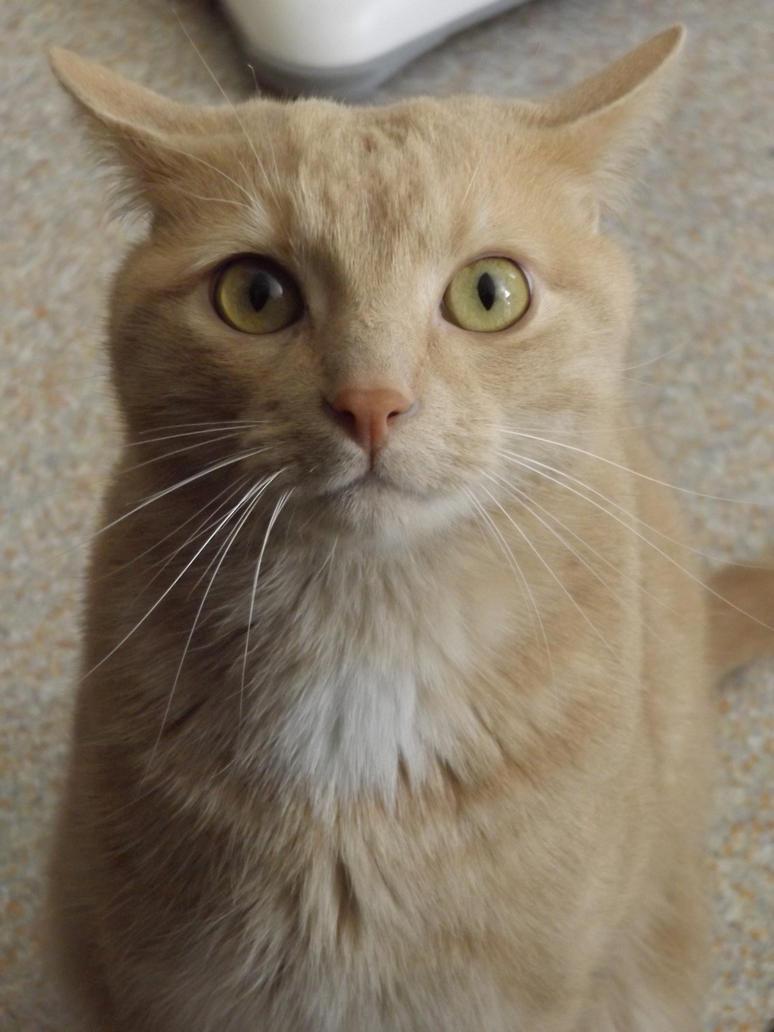 Cat 4 by Alphagoth