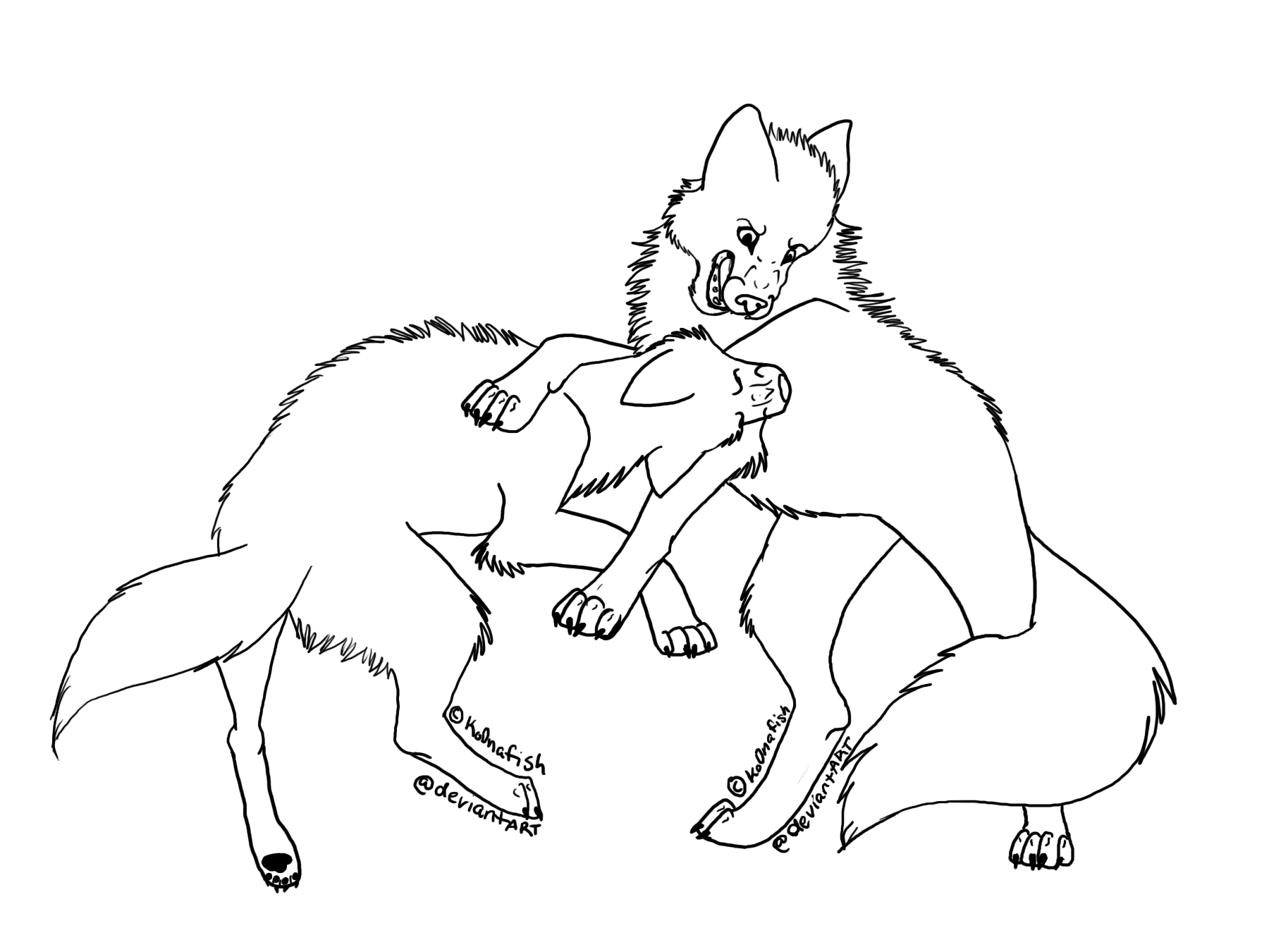 Fighting Wolf Lineart by Ko0nafishFighting Wolf Drawings