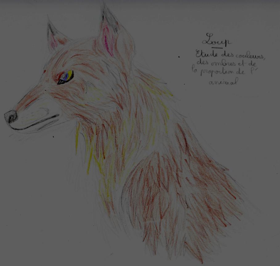 Loup Dessin Sur Papier Au Crayon By Vita Tani On Deviantart