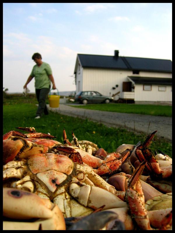 CrabII by AlabasterDuchess