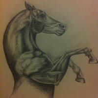 Horse sketch by clairestevenson