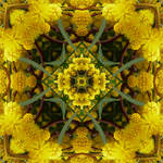 Mimosa Metamorphosa by MarvickSands