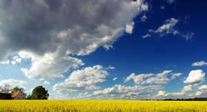 Painted Skies by StellareBP