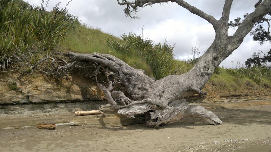 Dead tree by Drindian
