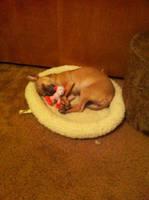 Kiki puppy by bloodredsheep