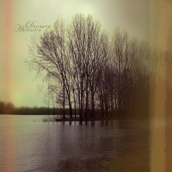 Forever trees by dasidaria-art