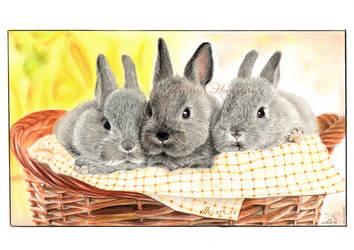 T's bunnies by dasidaria-art