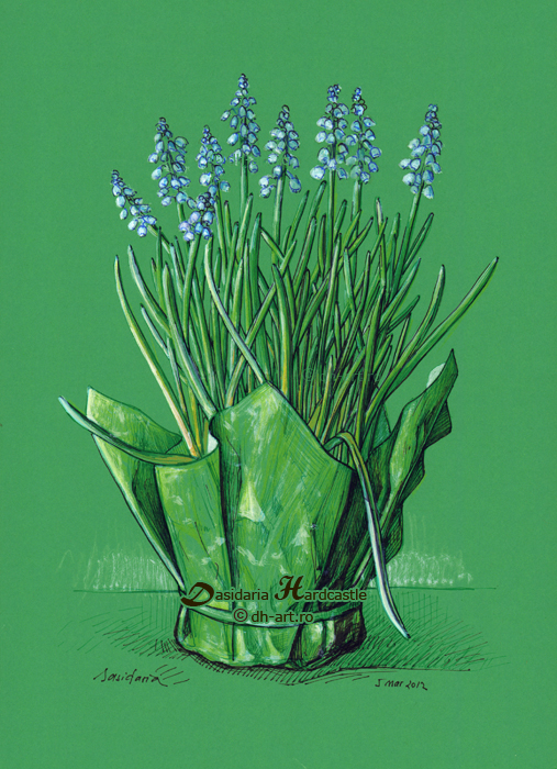 Grape hyacinth by dasidaria-art