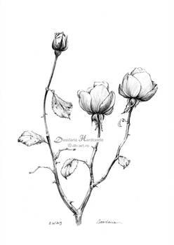Roses - sketch